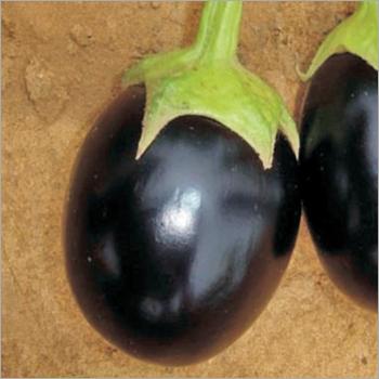 Brinjal (Madhave-525) seeds