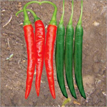 Chilli (Deshi hot) seeds