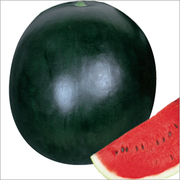 Watermelon (Black King)Seeds