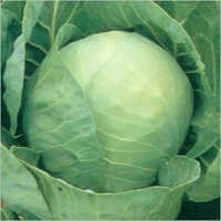 Cabbage (Basu) Seeds