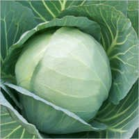 Cabbage (TEZ) seeds