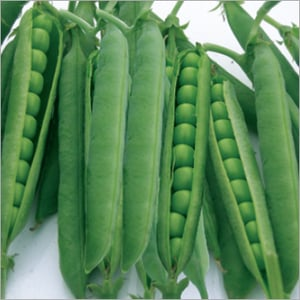 Pea (Green Master) Seeds