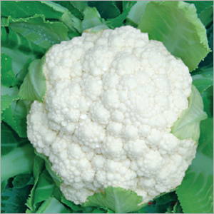 Cauliflower (speed-50)seeds