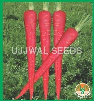 Carrot - Hybrid Lal Pari