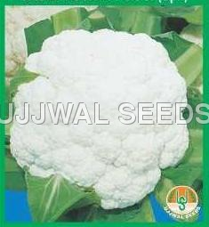 Cauliflower - Poosi (Spl.)