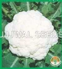 Cauliflower - Aghani (spl.)