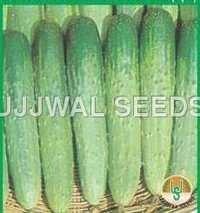 Cucumber - summer long -45(spl.)