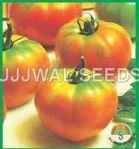 Tomato - P.K.M -1