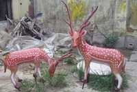 Deer Model