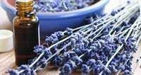 Lavender Water