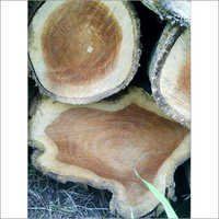 Panama Teak Wood Logs