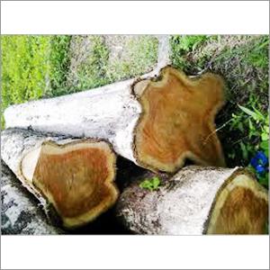 Brazilian Teak Wood Logs