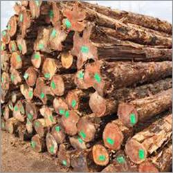 Benin Teak Wood Logs