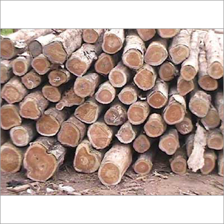 Guatemala Teak Wood Logs
