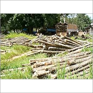 Sudan Teak Wood Logs