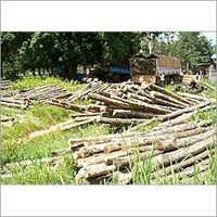 Sudan Teak Wood Logs