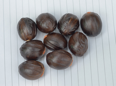 Kochukudy - Improved nutmeg variety