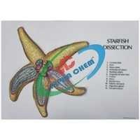 Anatomy Of Starfish