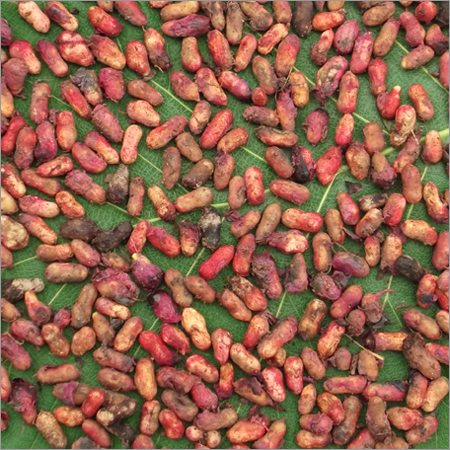 Natural Jamun Seeds