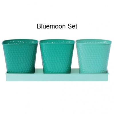 Bluemoon Herb Garden Sets