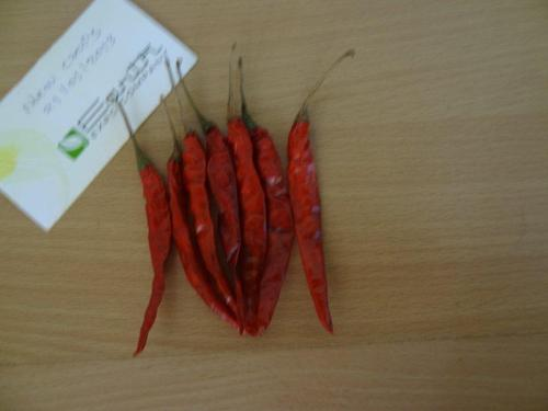 Teja Chilli from india