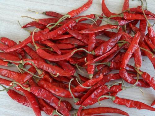 Chilli from Andhra pradesh