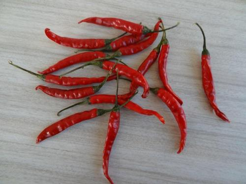 Dry Red Chilli From Mp