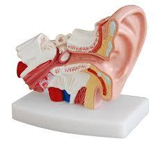 Desktop EarModel
