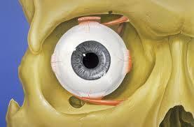 Eye with Orbit