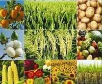 Food Products Safety & Analytical Testing Services