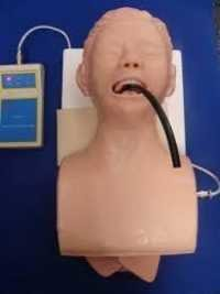 Human Trachea Intubation Model