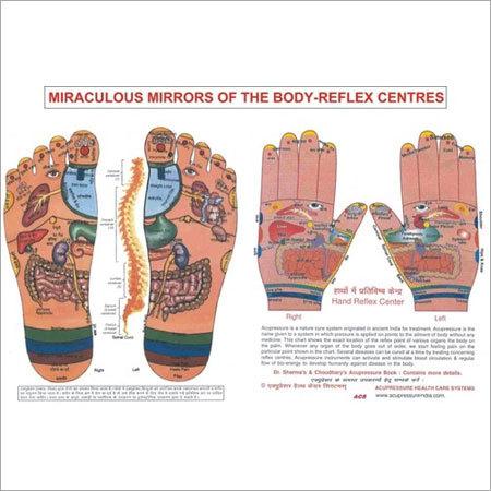 ACP Foot & Hand Reflexology Chart