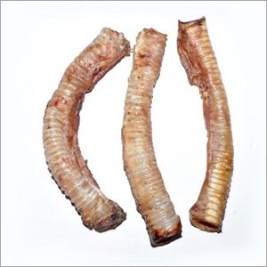 Frozen Trachea