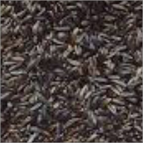 Niger Seed
