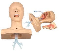Suction Training Model