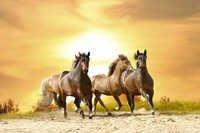 BROWN HORSES MURAL