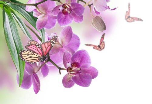 BUTTERFLY FLOWER MURAL