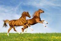 HORSES Mural