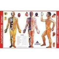 ACP Meridianology Chart - Acupuncture