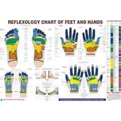 ACP Reflexology Chart Eng. 20