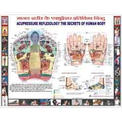 ACP Reflexology Chart - Hindi 18