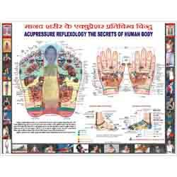 ACP Reflexology Chart - Hindi 18