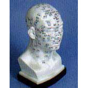 Acupuncture Model - Head
