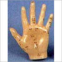 Acupuncture Model - Hand