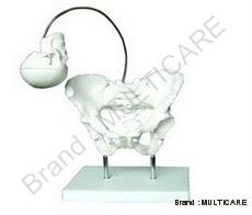Birth Demonstration Model