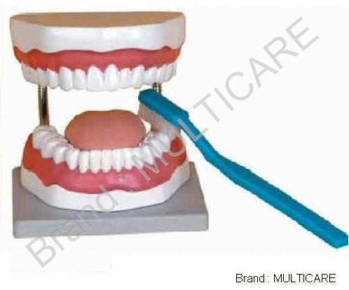Tooth Hygiene Set Model