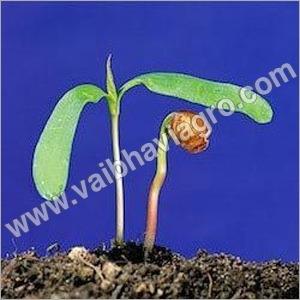 Granual Growth Promoter