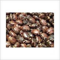 Arandi Seeds