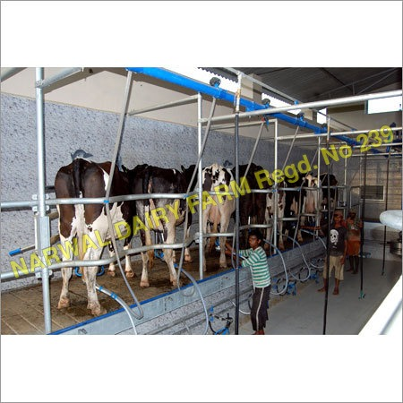 Dairy Farming Cows