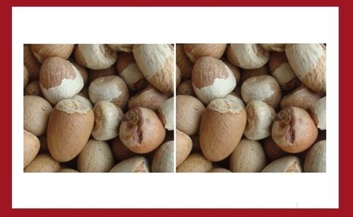 Lindi Betel Nuts